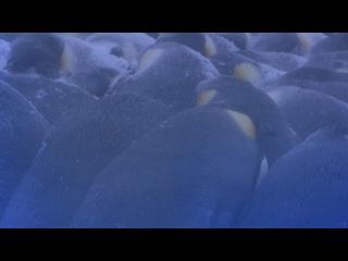 Пингвины. Шпион в стае (2013) 2 серия